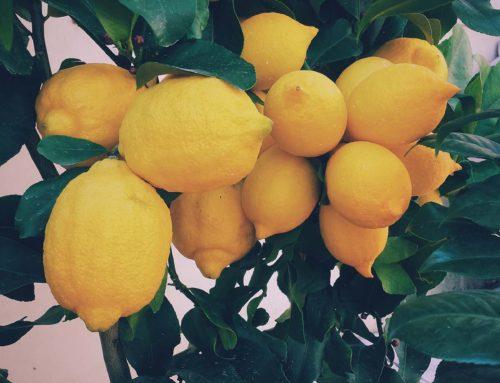 5 alimentos depurativos que todos tenemos en casa